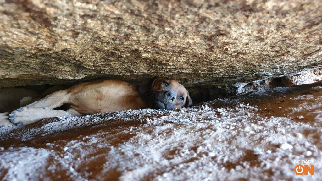 Il cane riposava tra le rocce