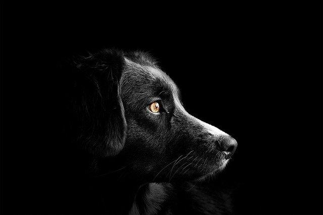 Il pericolo dei cani abbandonati