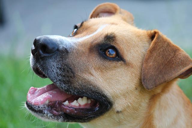 L'adozione del cane maltrattato