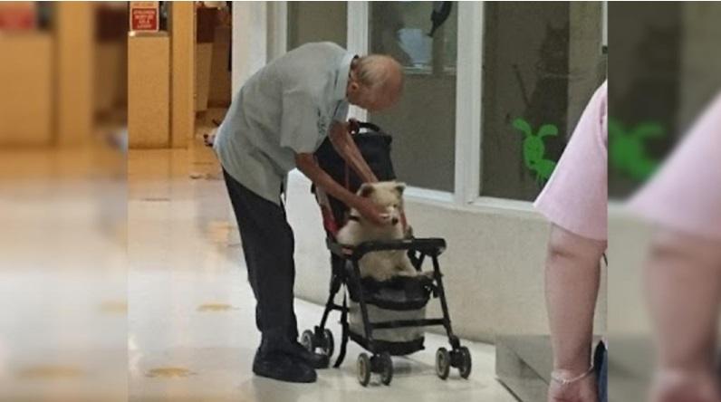 Cane anziano non riesce a camminare