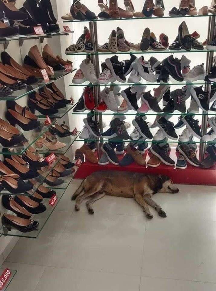 Il cane in mezzo alle scarpe