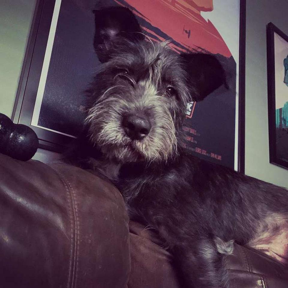 Rigby il cane che saluta i vicini