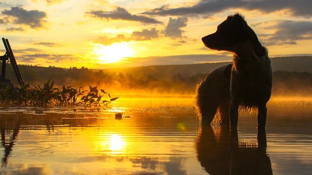 Cane passeggia in acqua