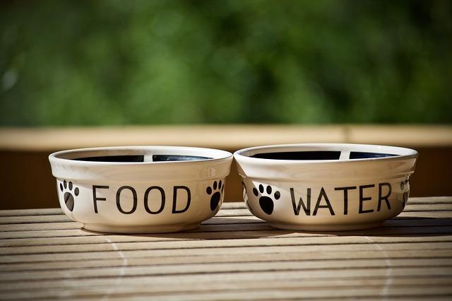 Ciotola del cibo e dell'acqua