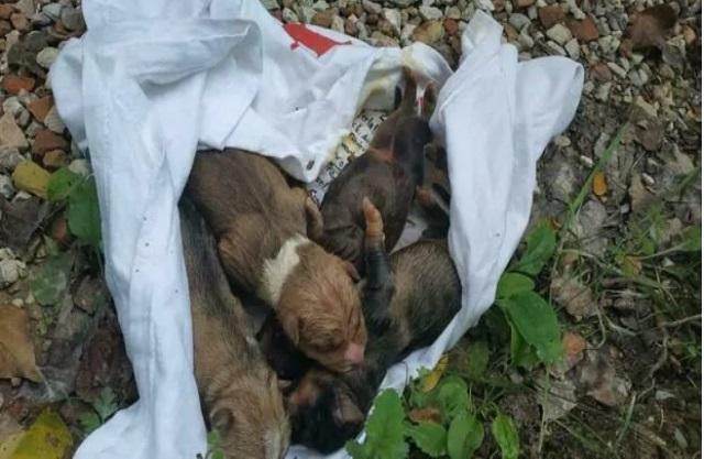 Cuccioli trovati a Peglio