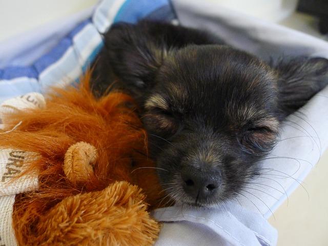 Salvati quattro cuccioli di cane