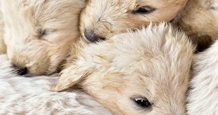 Cuccioli salvati in un contenitore per indumenti