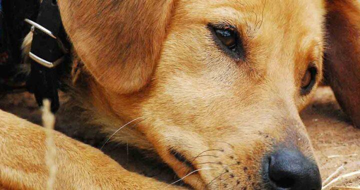 Cucciolo accompagna il proprietario incosciente