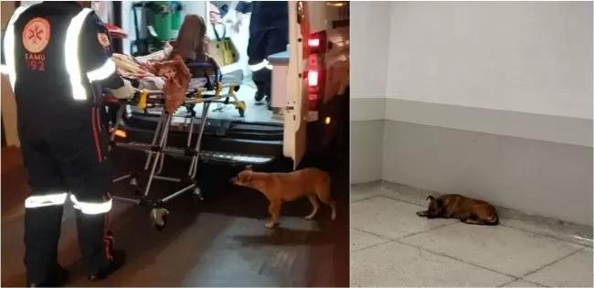 La cagnolina Belinha in ospedale