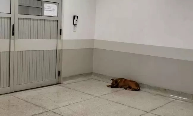 La cagnolina aspetta in pronto soccorso