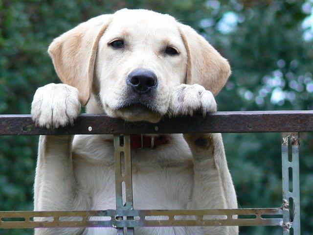 Cucciolo in attesa del proprietario