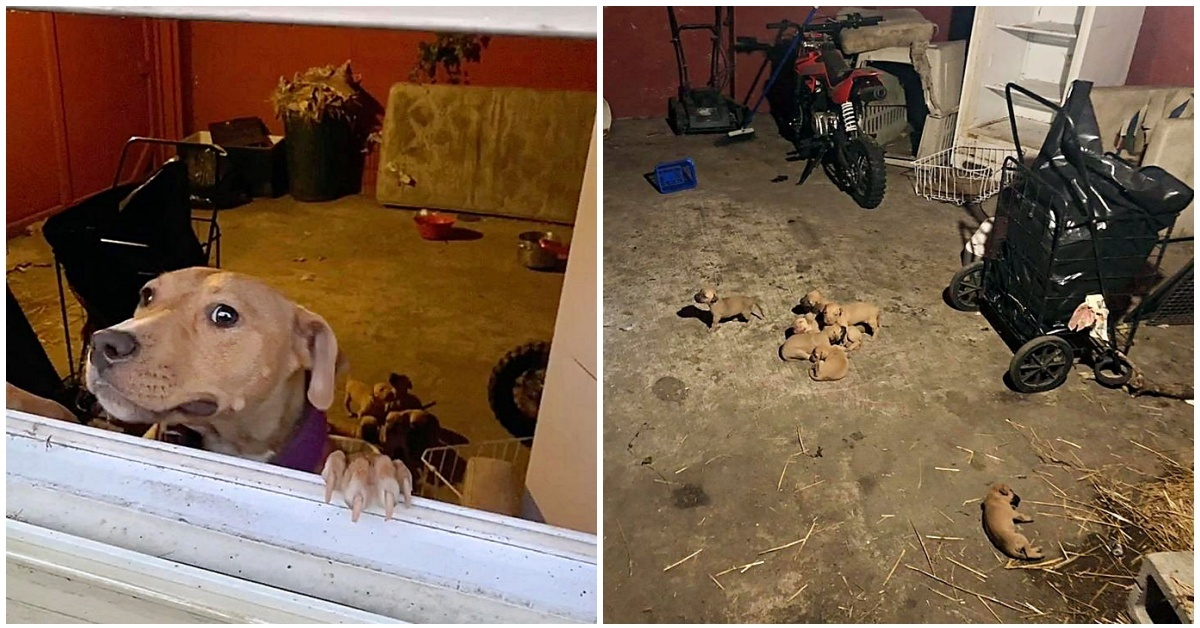 Volontari salvano dodici cuccioli