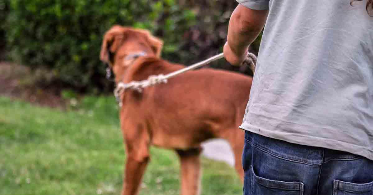 Dog sitter porta a passeggio i cani