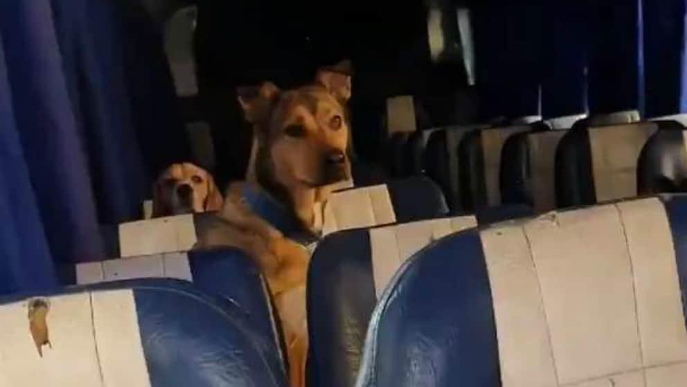 Cani sullo scuolabus