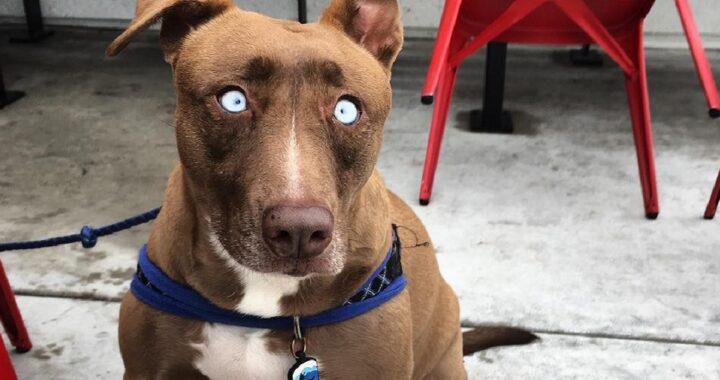 Donna adotta cane cieco abusato sin da cucciolo