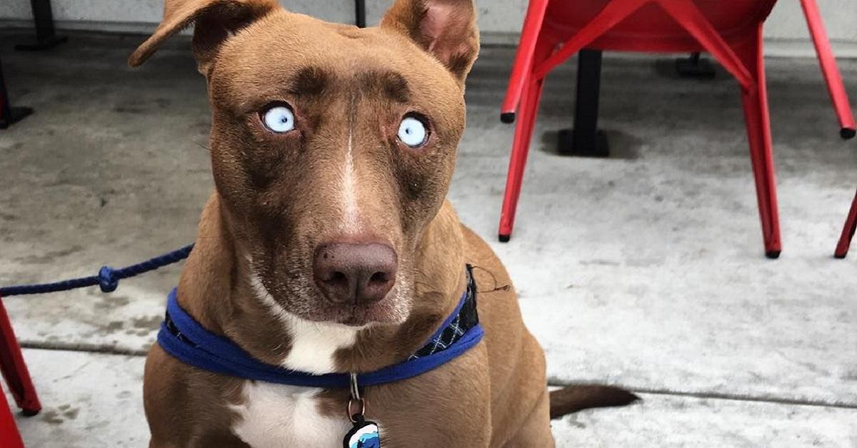 Adotta cane cieco
