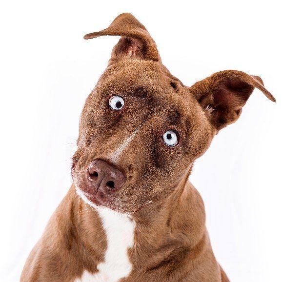 Il cane di Forever Home Pet Rescue