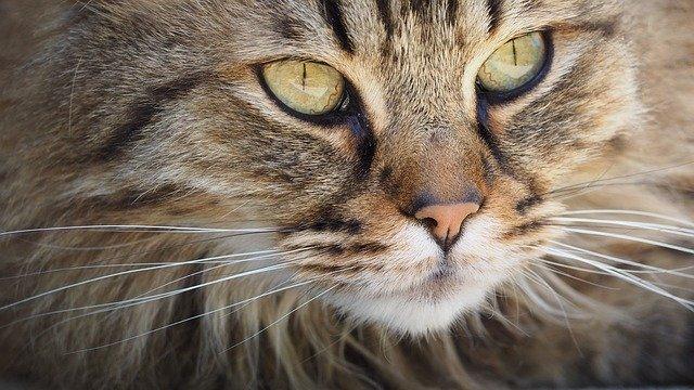 La tristezza della mamma gatto