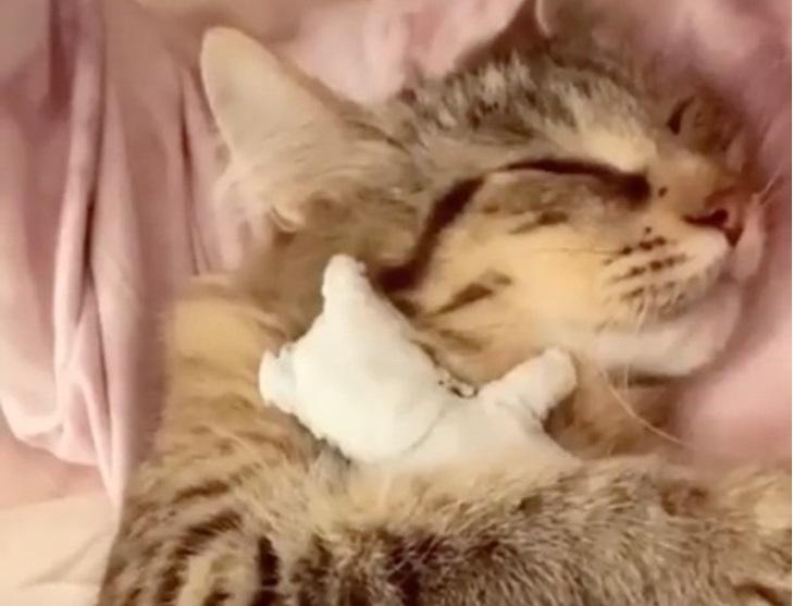 La mamma gatto e il suo peluche