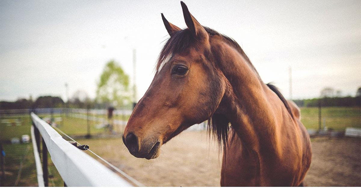 Macellazione Cavalli