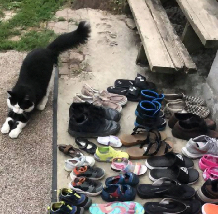 jordan gatto ruba scarpe