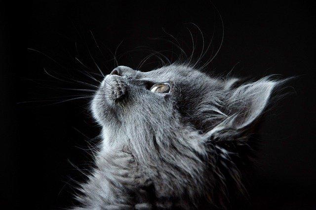 La malattia del gatto