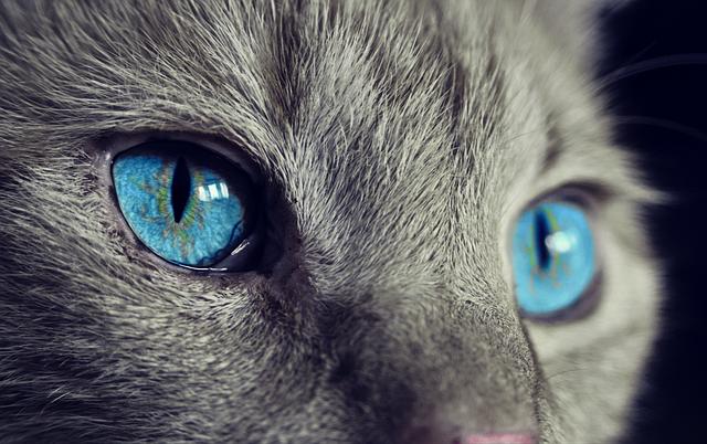 Vivere con un gatto in casa