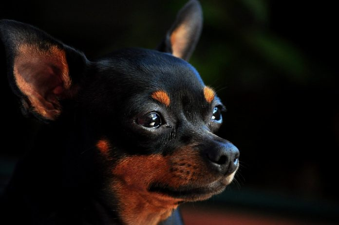 Caltanissetta, morto il cane lasciato sul balcone