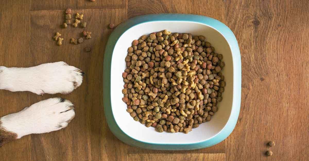 cibo al cane
