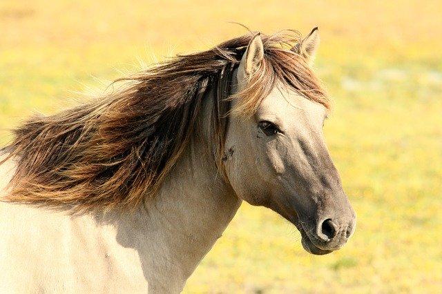 Cavallo che corre nel prato