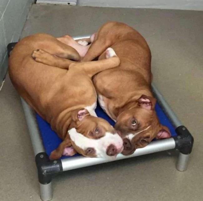 I due cani inseparabili al rifugio