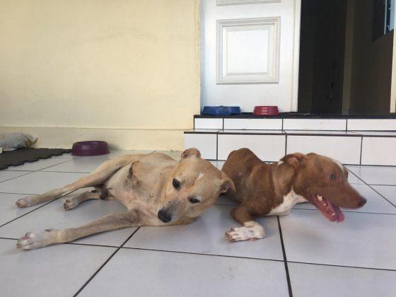 Cani vivono insieme in casa