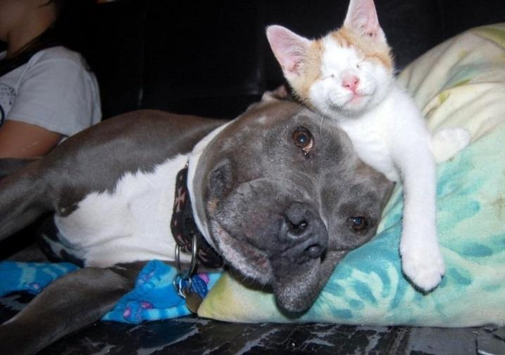 Un cane nero e un micio bianco