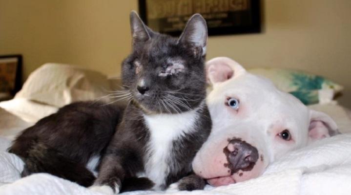 Il pit bull e il micio non vedente