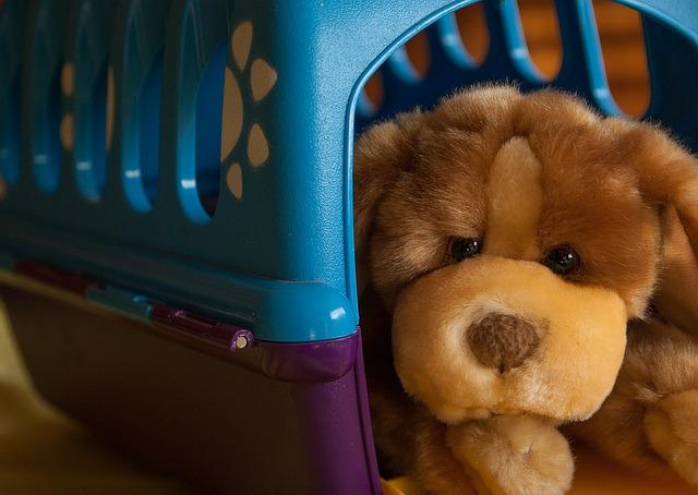 La storia del cane Dandy