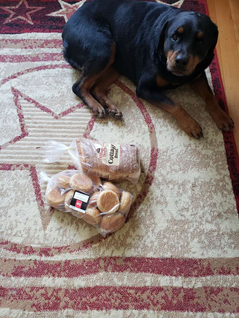 Jakey il Rottweiler che ama il pane
