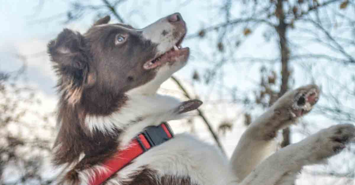 L'adozione del cane di strada