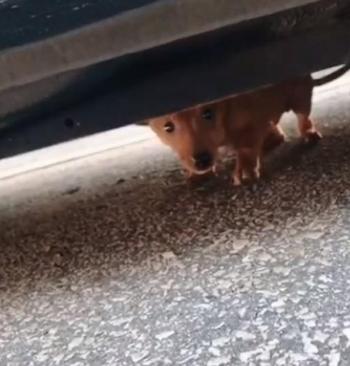 salvataggio Peanut