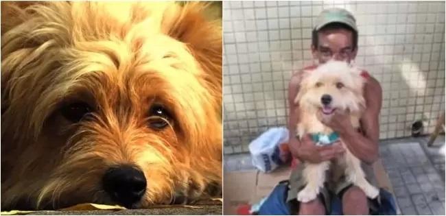 L'uomo e il cane senzatetto