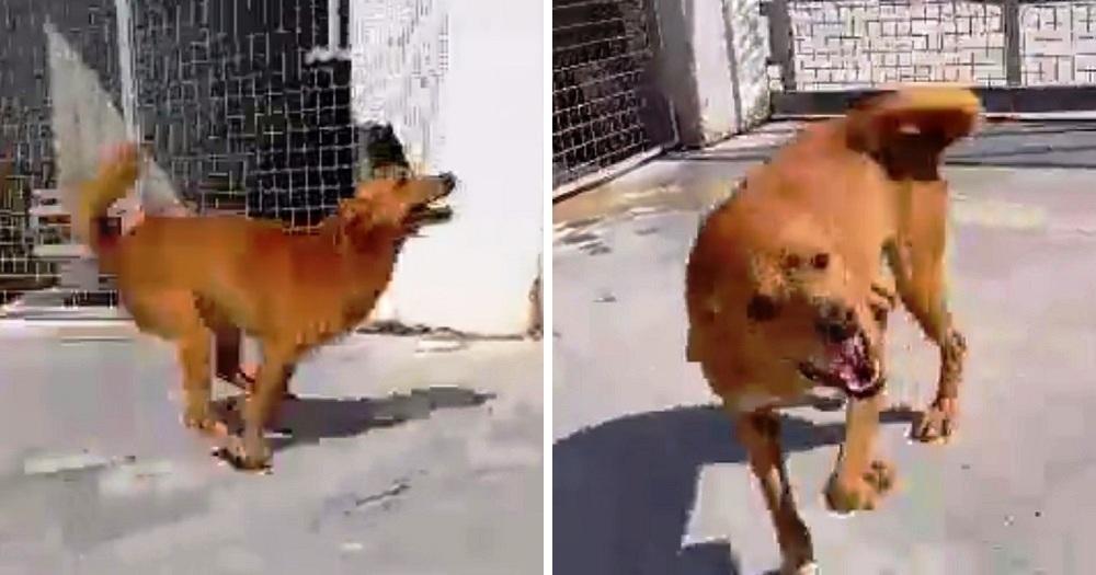 Il video emozionante di Tito