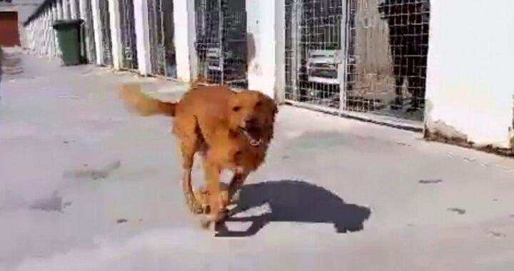 Cane indesiderato viene adottato dopo 9 anni: l'emozionante video di Tito