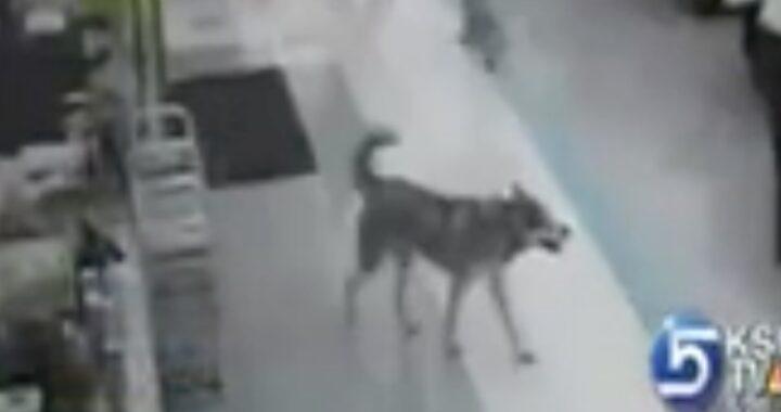 Akira, il cane ladro che ruba un osso