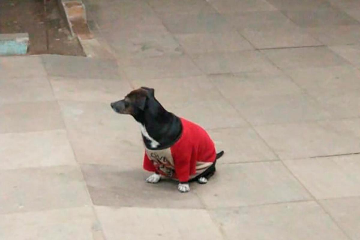 Anderson Bahi e il video del cane che non abbandona il suo proprietario