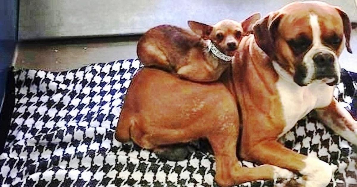 Buster e Little Miss