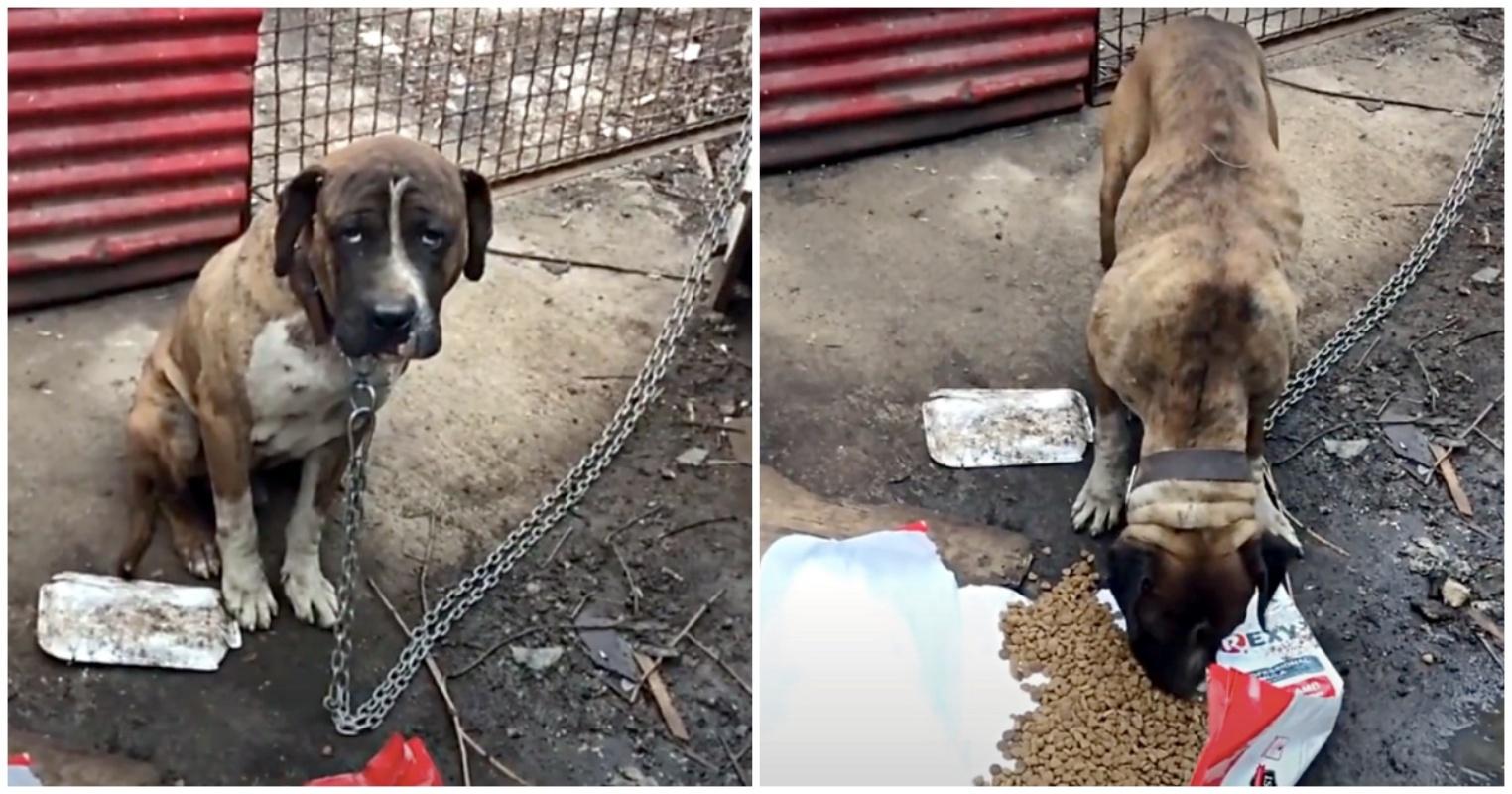 Cane legato salvato dai volontari