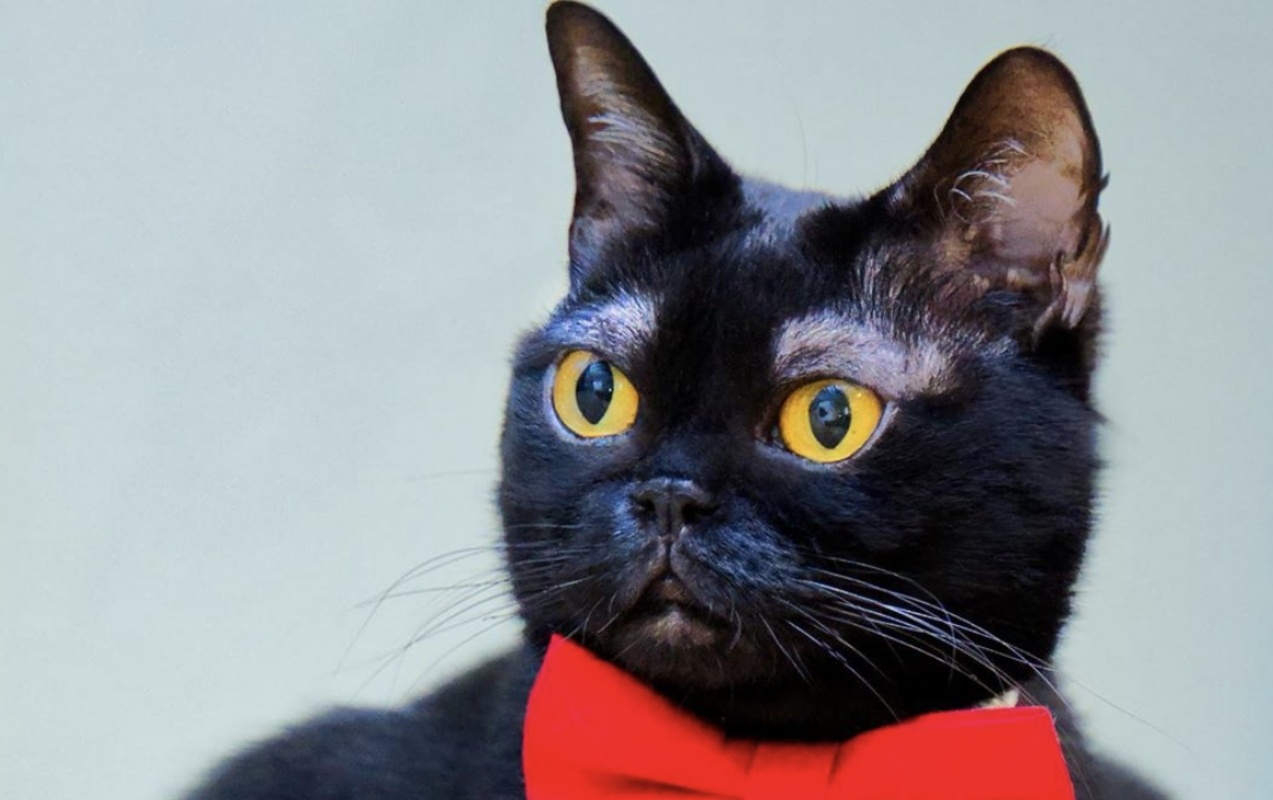 Cornelius, il gatto con le sopracciglia