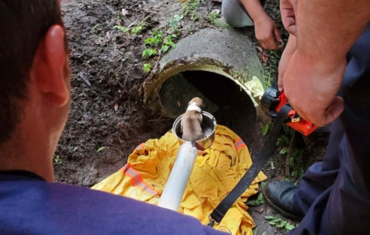 Salvati cuccioli in un canale