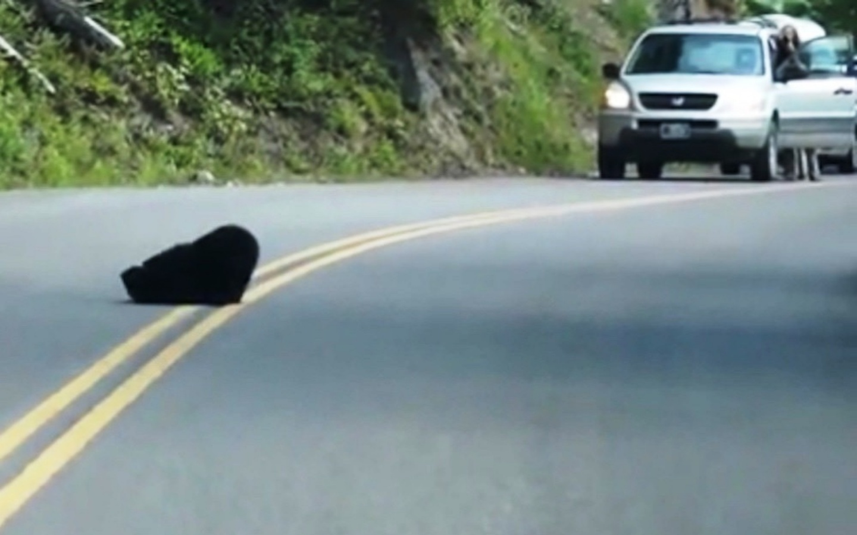 David Peterson e i due orsetti