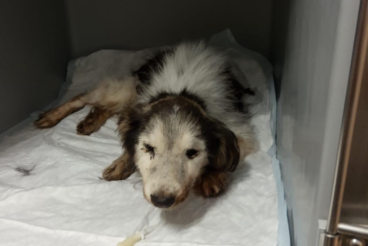 È morto Lucky, il cane trovato nel cassonetto