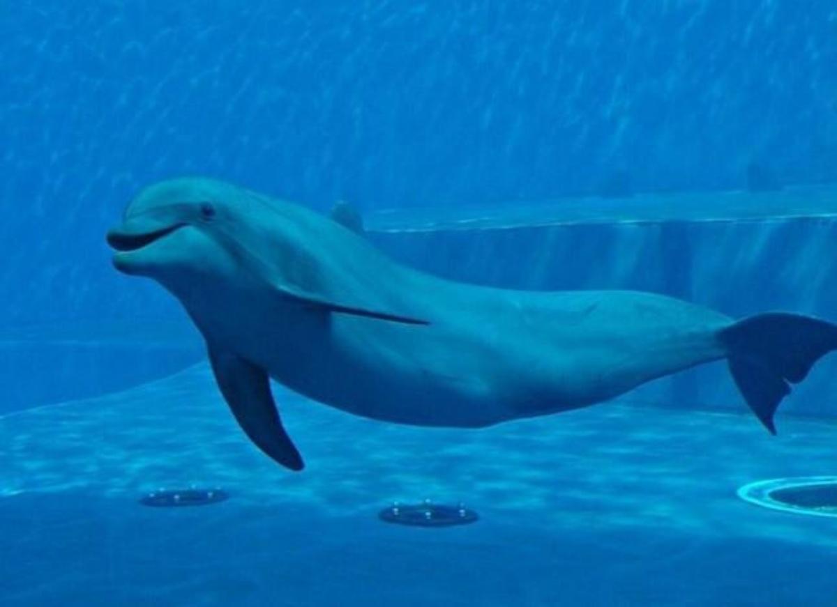 Naù il delfino